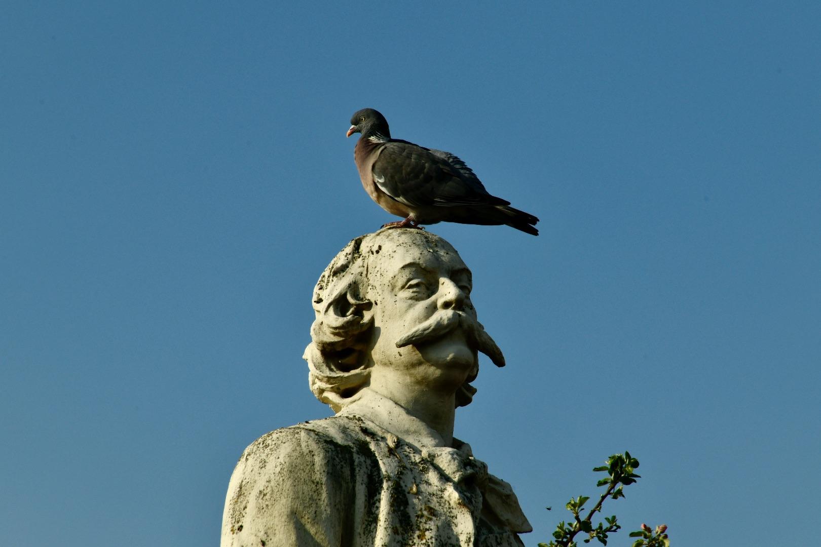 Gustave et le pigeon